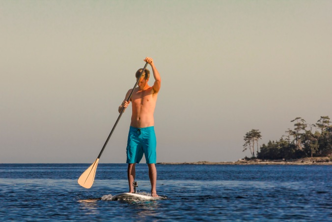 Get a closer look at wildlife while paddleboarding!