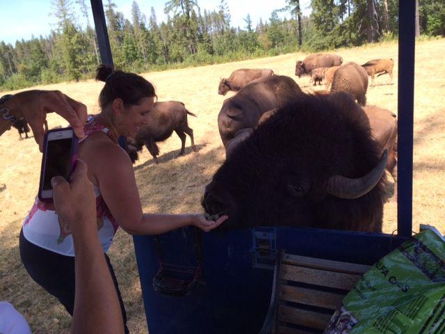 Ever fed a buffalo?
