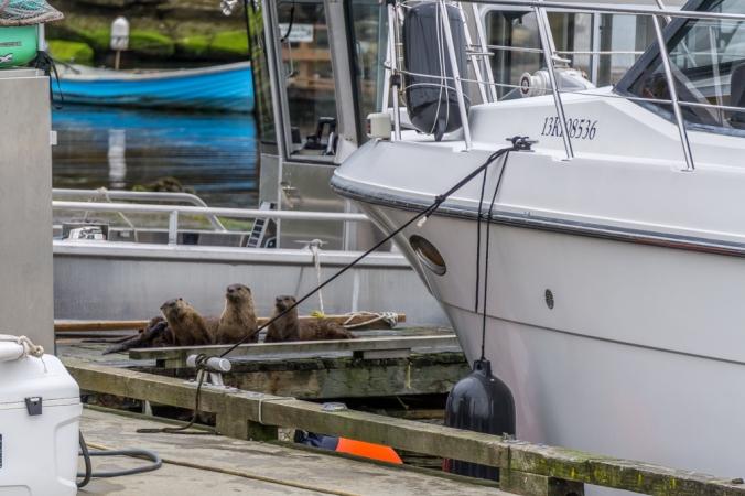 VancouverIsland_Nanaimo_Otters-03782.jpg